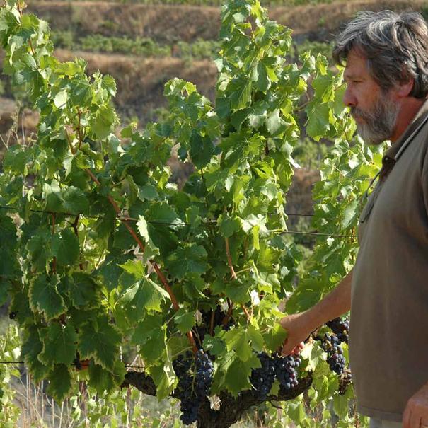 René Barbier en el viñedo