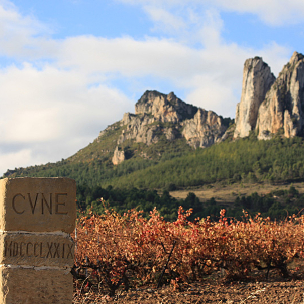 Panorámica de los viñedos de CVNE