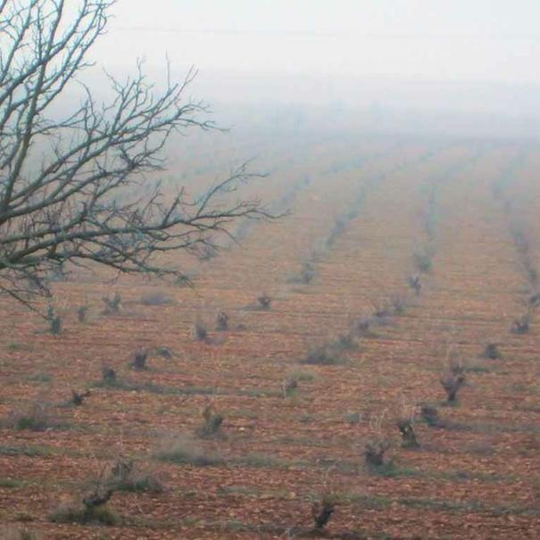 La finca en un día de niebla
