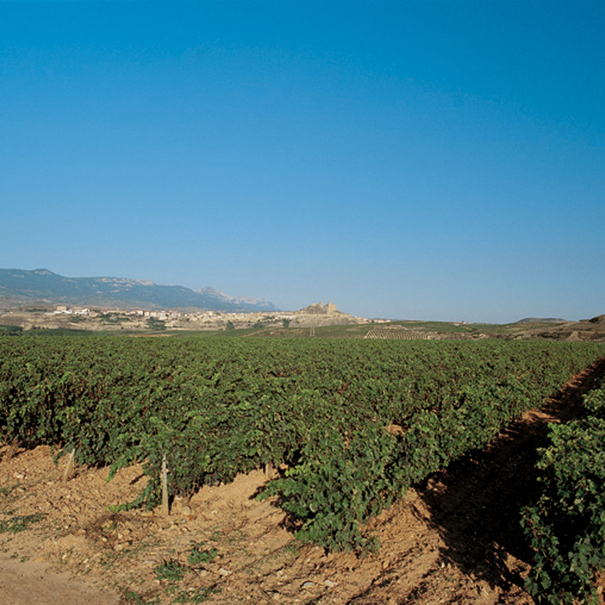 Vistas del viñedo riojano