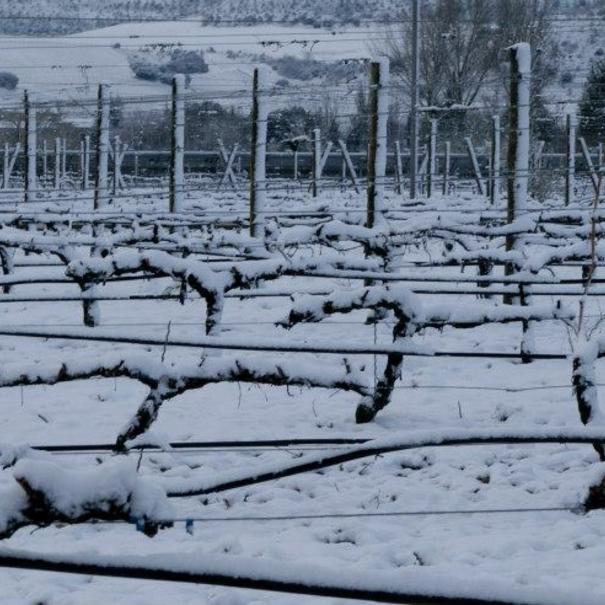 Viñas nevadas