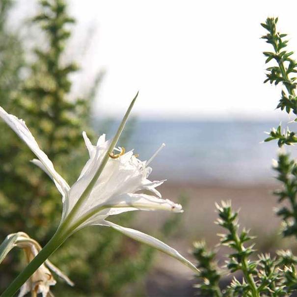 flores y el mar de fondo