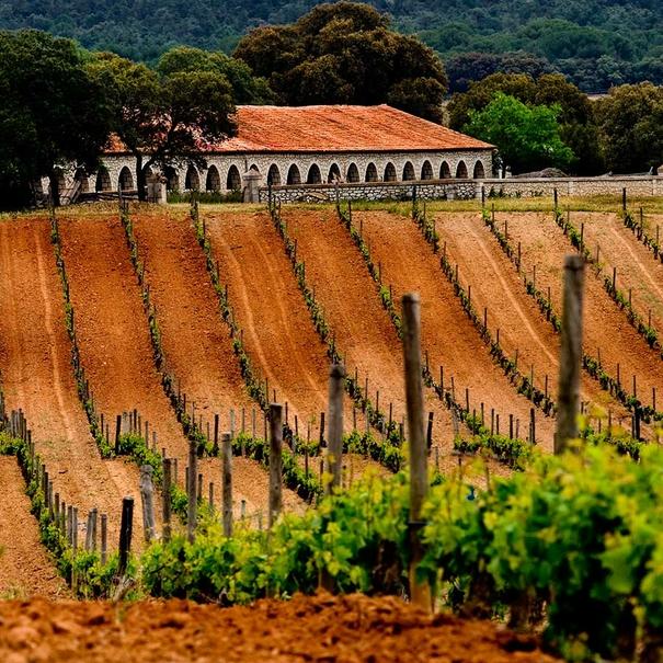 Imagen de viñedos con la propiedad al fondo