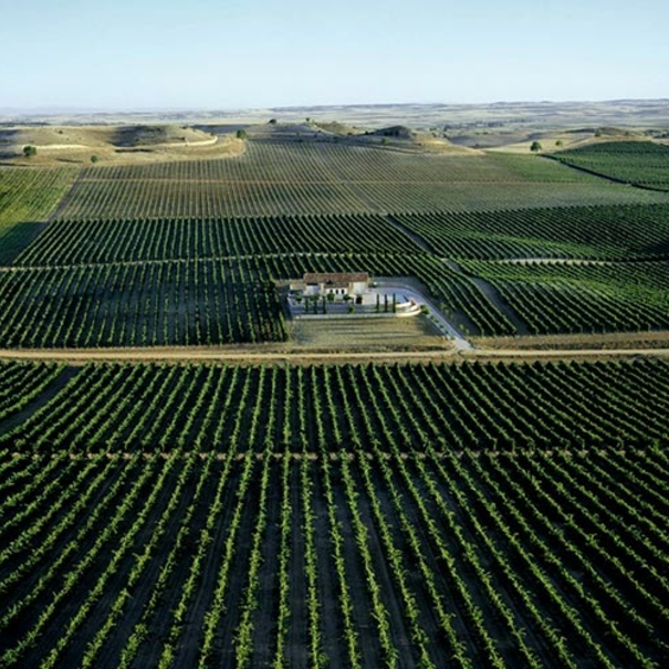 Panorámica de los viñedos del Pago de Valdelacasa