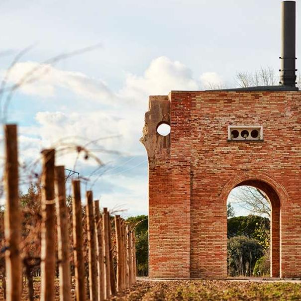 Detalle de la zona de viñedos