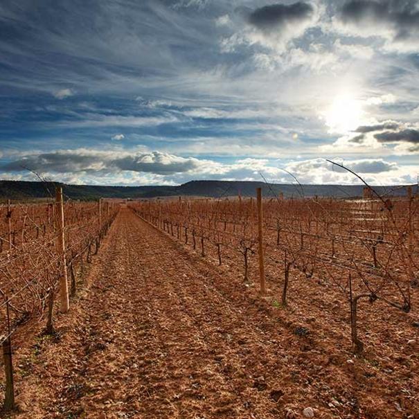 Viñedo de Vega Sicilia en invierno