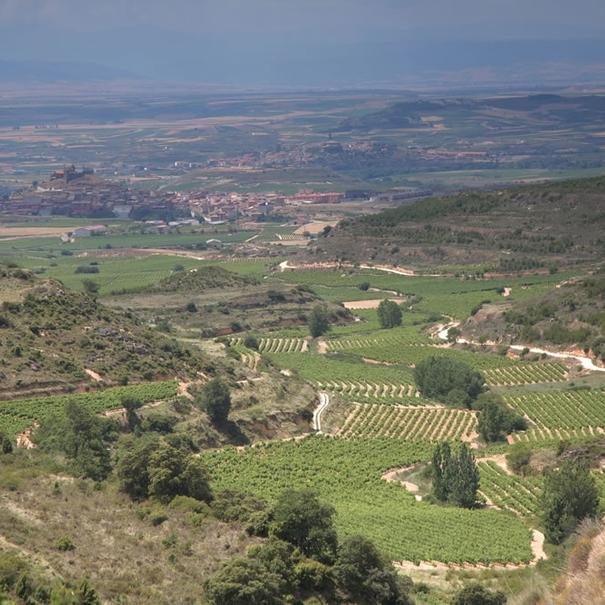 Panorámica con el viñedo de La Canoca en primer término