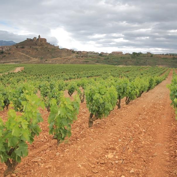 Viñedos en Sierra Cantabria.