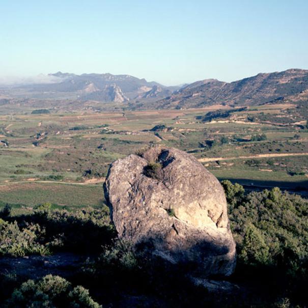 Vista del viñedo de Las Beatas