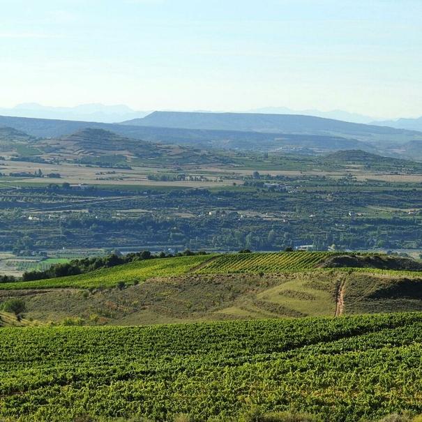 Panorámica del viñedo en Nalda