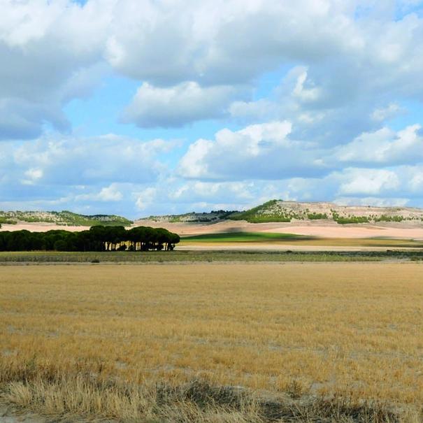 Llanuras en Sardón de Duero (Valladolid)