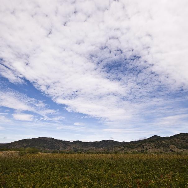 Viñas y cielos de Montsant
