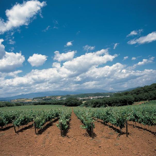 Vista de una parte de las 200 hectáreas de viñedo de la bodega