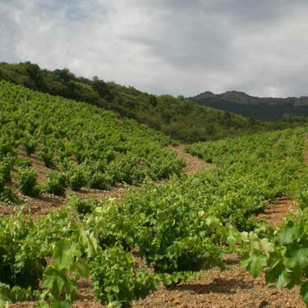 Preciadas viñas de Viñedos y Bodegas Pablo.
