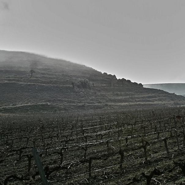 Enero en viñedo de Piñel