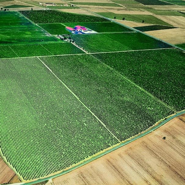 Vista aérea de los viñedos en Finca La Emperatriz