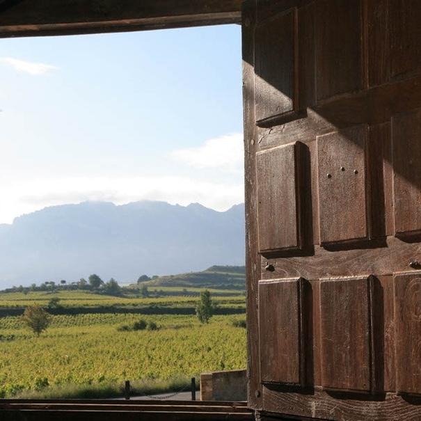 Vista del viñedo desde el interior de la bodega