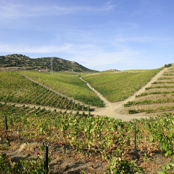Vista de viñedos al otro lado del Duero