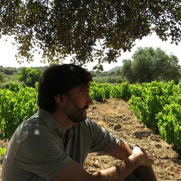 José Benavides, en el viñedo