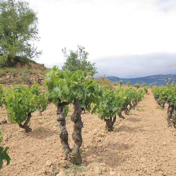 San Cepito. Viñedos en Sierra Cantabria.