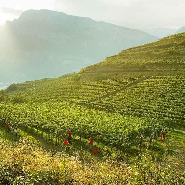 Viticultura de montaña