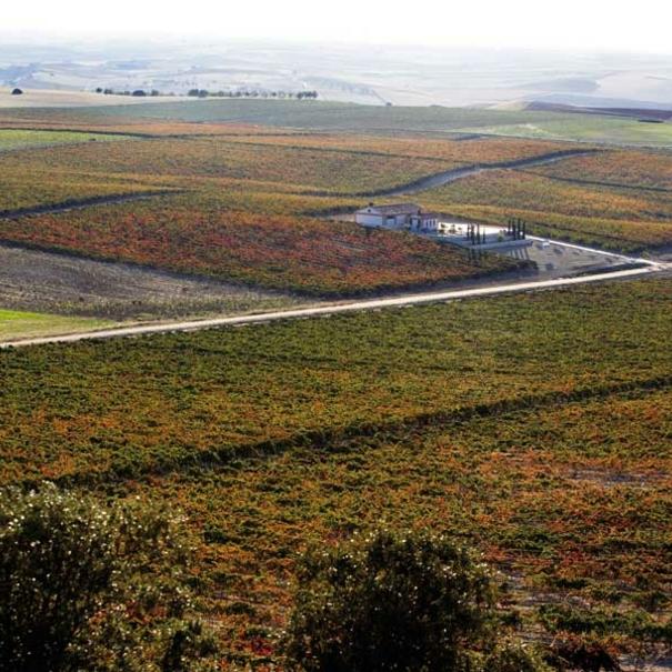 Vista aérea de los viñedos de Frontaura
