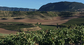 Ruiz-Clavijo Family Estates