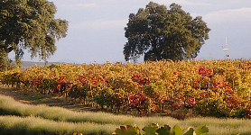Marqués de Griñón Family Estates