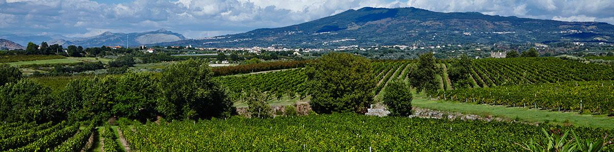 Villa Matilde Vigna Caracci Bianco 2015 (x6)